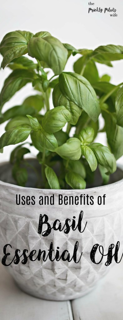 A green plant in a white pot with Basil Essential Oil written on it.