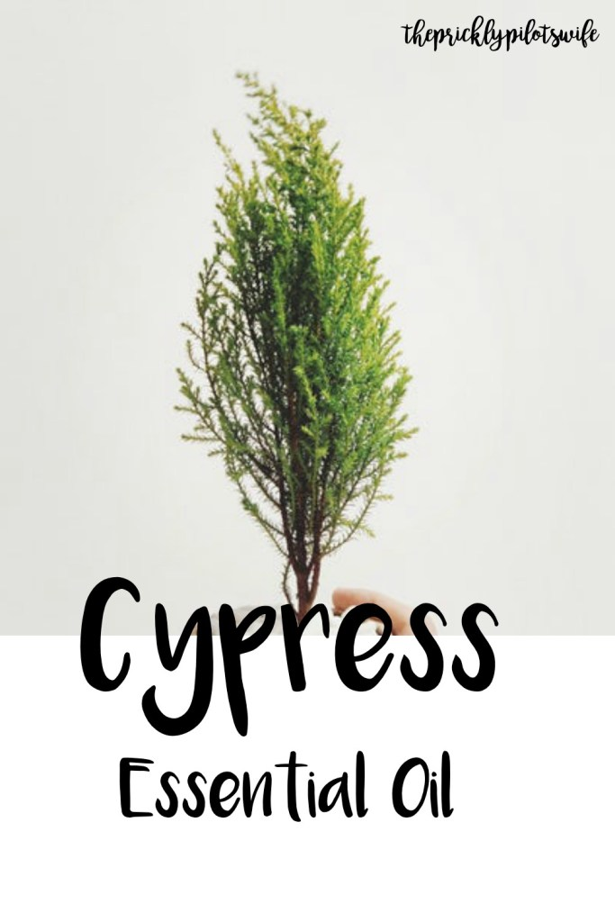 "vertical image of a miniature evergreen tree in a pot held up by a hand with ""Cypress Essential Oil"" written over the image. // The Prickly Pilot's Wife"