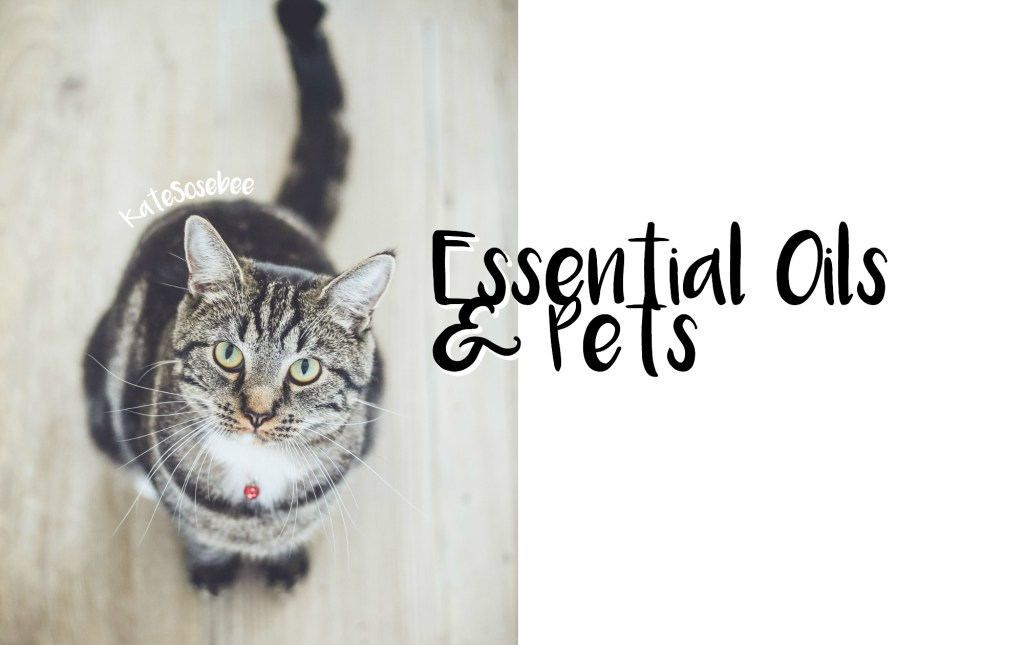 essential oils for pets doterra safety vet
