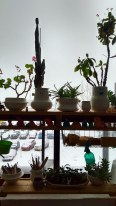 Charming plants and cacti in charming creature pots by Wai-Yant Li