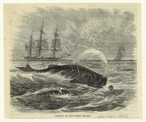 Pursuit of the Sperm Whale - New York Public Library