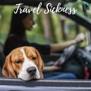 travel sickness featured the professional traveller