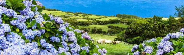 azores holiday azores island