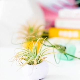 DIY Concrete Gem Mini Planters