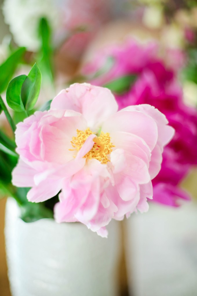 peony by @theproperblog for Nicole's Classes