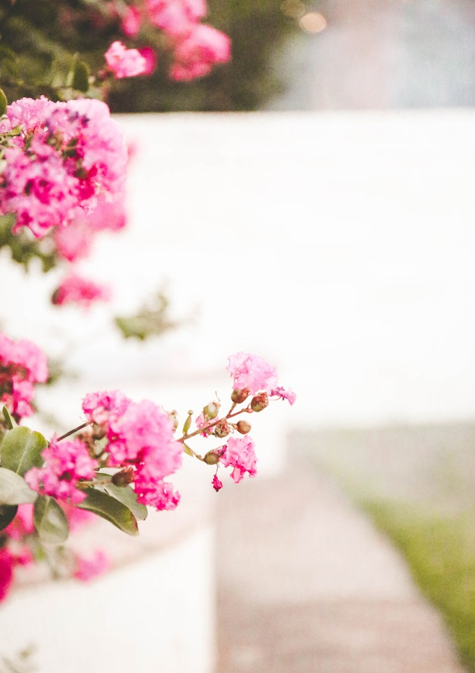 pink flowers against white blurred background