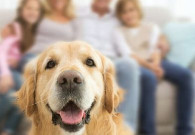 Pet-friendly properties: Can compassion breed profit?
