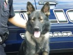 Health Concerns Force Retirement of Lamar Police Department Canine