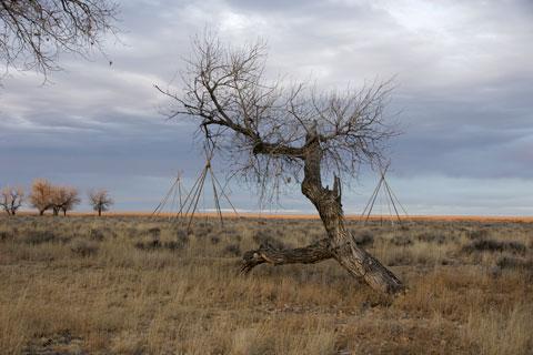 Sand-Creek-Tree