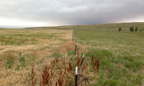 Image caption: Typical cheatgrass invasion in rural Sedgwick County. The pasture on the left is fully invaded, and the manager of the pasture on the right is preventing invasion through grazing management. Photo credit: author.