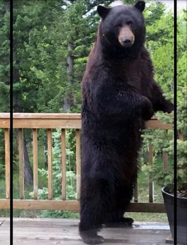 Colorado Parks and Wildlife Courtesy Photo