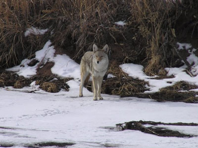 Courtsey Photo - Colorado Parks & Wildlife