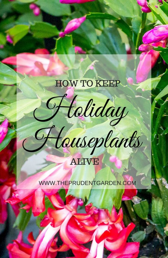 Holiday Houseplants2
