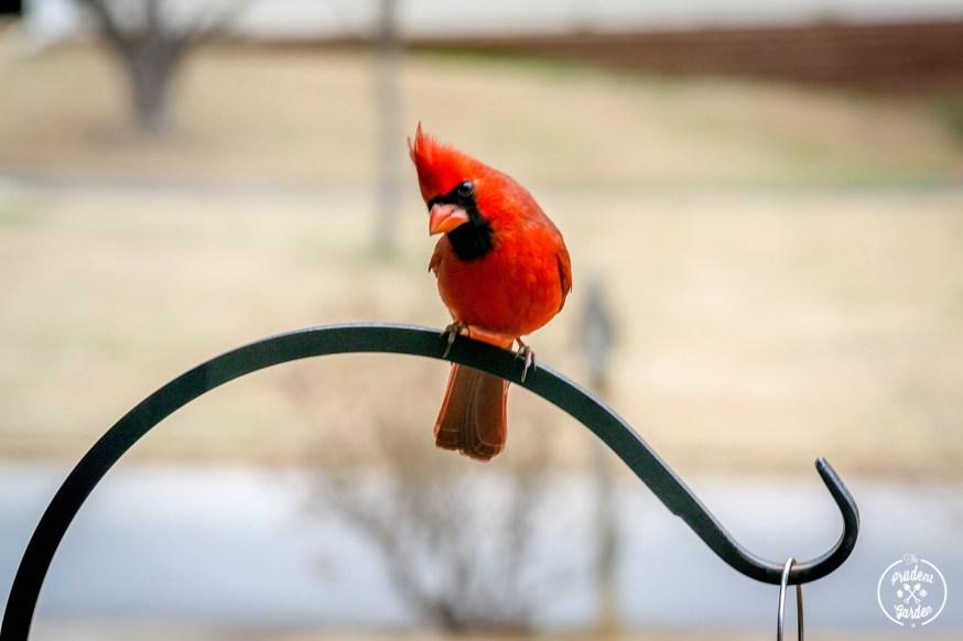 Backyard Birding: Get Started!