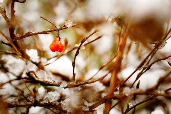 Gardening In The Marginal Season