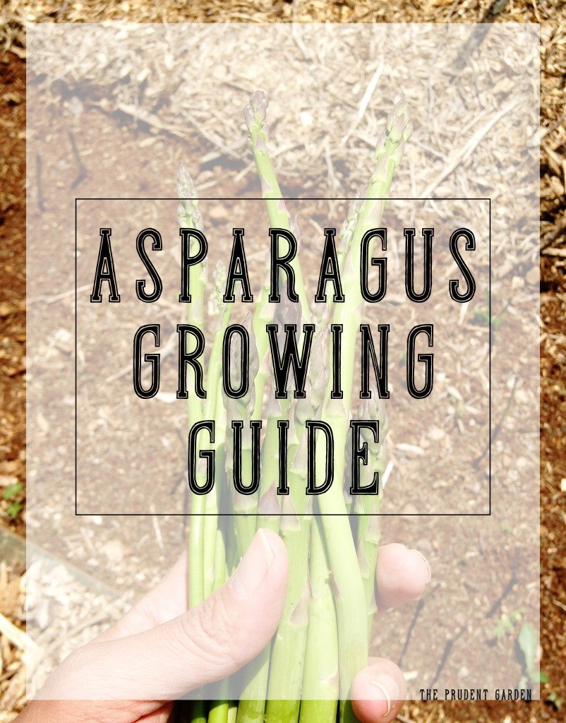 Asparagus Growing Guide|Cream of Asparagus and Spinach Soup