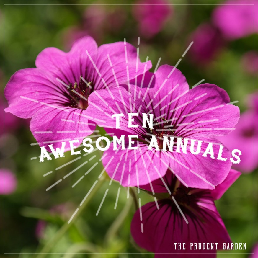 10 Awesome Summer Annuals Every Garden Needs