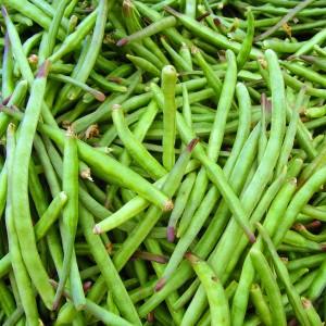 Cow Peas covercrop