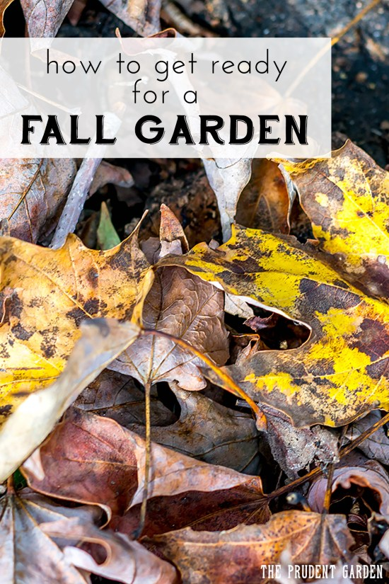 How To Get Ready For A Fall Garden