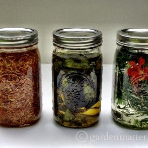 infusions_gardenmatter