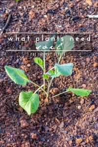 What Plants Need: Soil