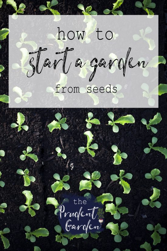 Planting a garden from seeds allows you greater flexibility in terms of timing and options, and far greater value compared with buying starter plants. If you have ever wondered how to start a garden from seeds, or why to start a garden from seeds, I can help.