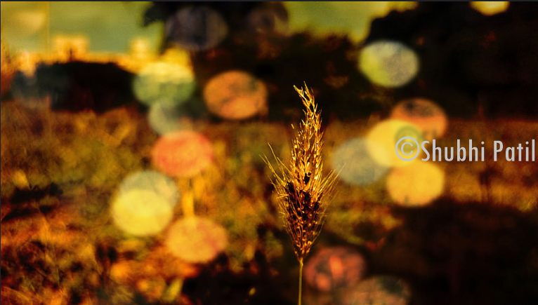 Bokeh somehwere unnoticed in bushes