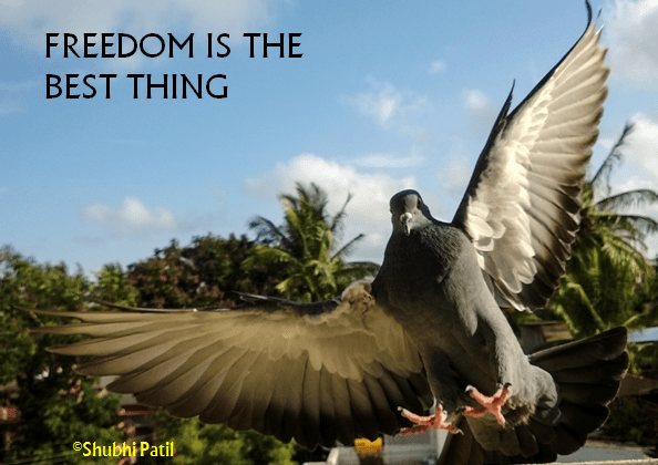 Freedom is the best thing.