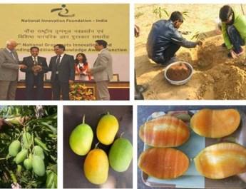 कोटा के किसान ने आम की ऐसी किस्म विकसित की जिसमें बारहों महीने फल आते हैं , राष्ट्रपति भवन में भी लगाया
