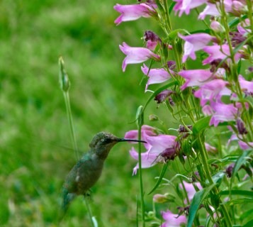 Hummingbirds from the porch