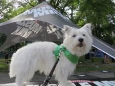 Doggy Dash 288