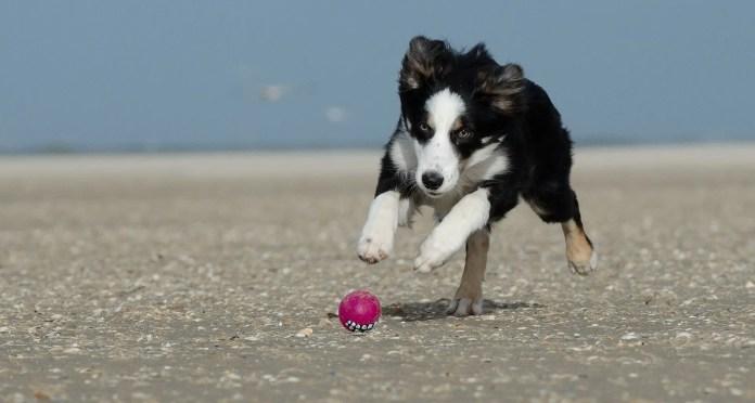 puppy beach etiquette