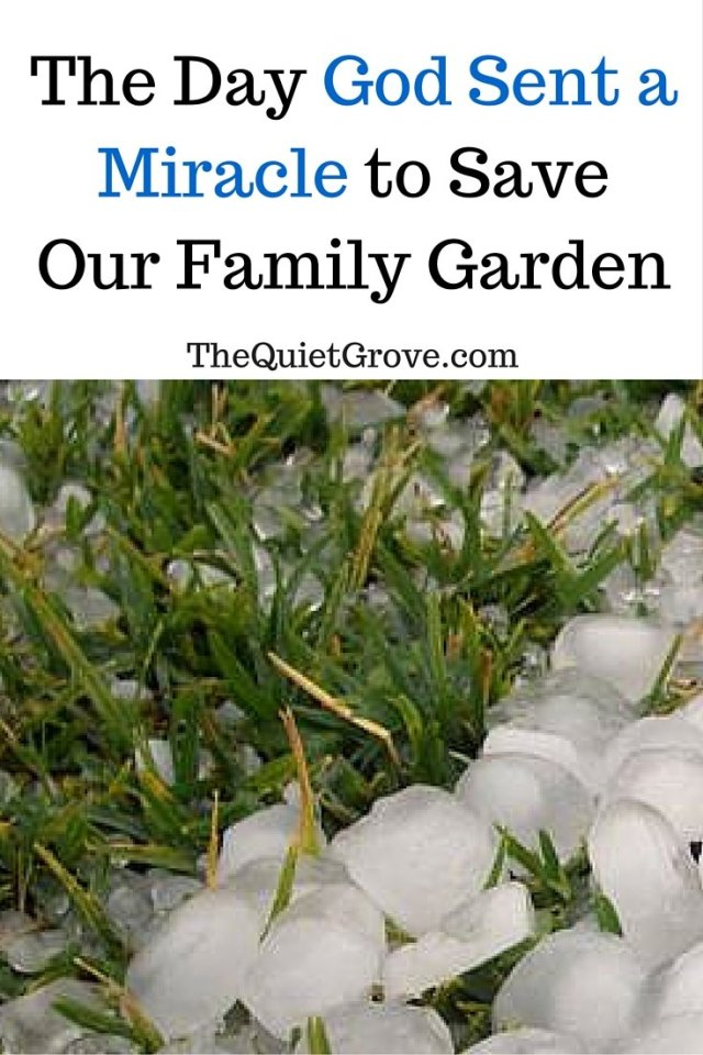 The Day God Sent a Miracle to Save Our Family Garden