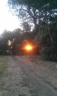 The last summer sunlight