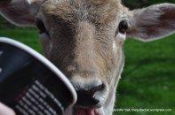 Deer and feeding cup at Wildlife Safari