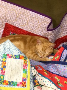 cute kitten asleep on colorful quilts covering a couch