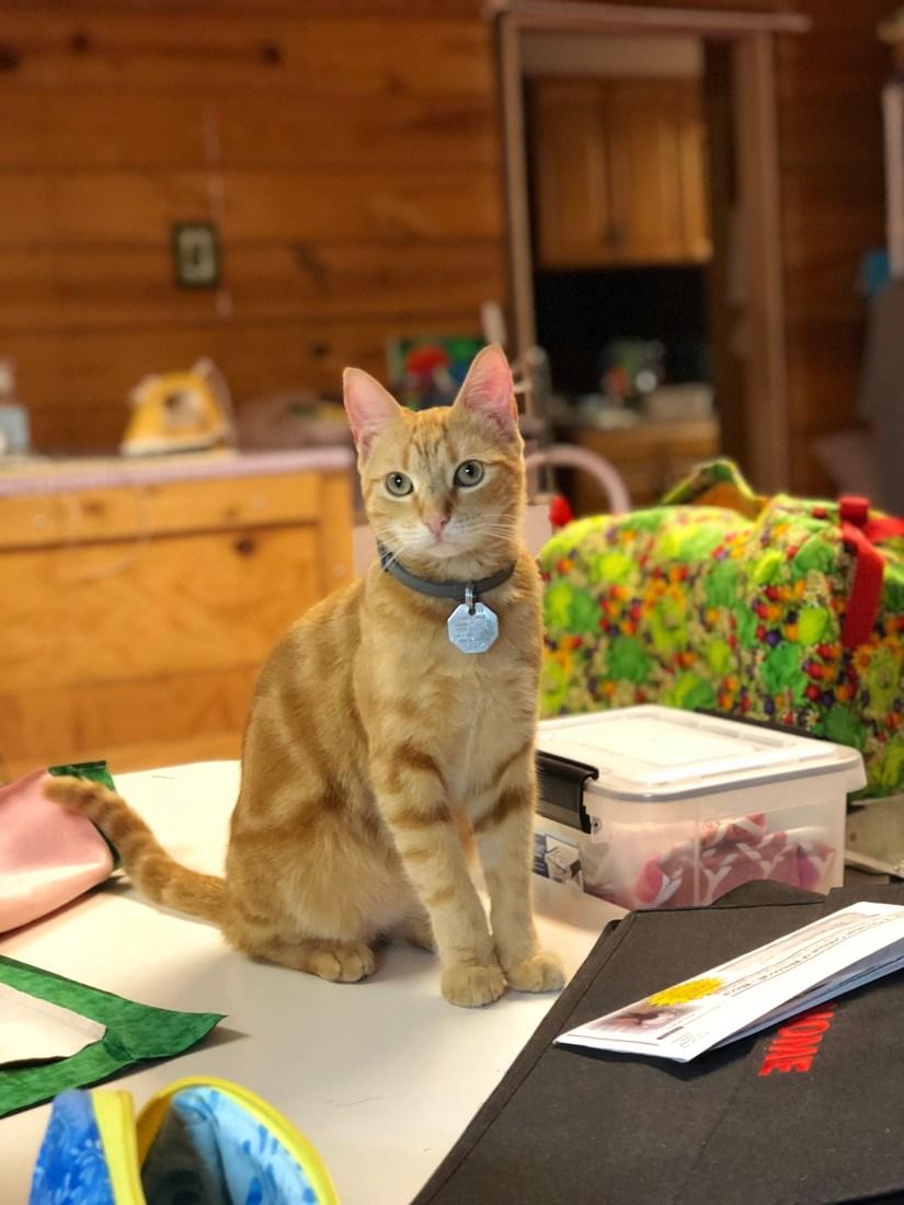 orange cat in The Quilt Rambler studio
