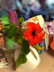 bloom where you are planted, a hibiscus in a vase