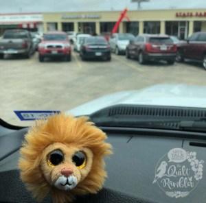 Little Lion Judah visits Pinwheels and Posies