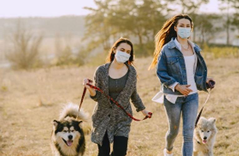 كمثل الكلب – اضطراب نسبية المفاهيم