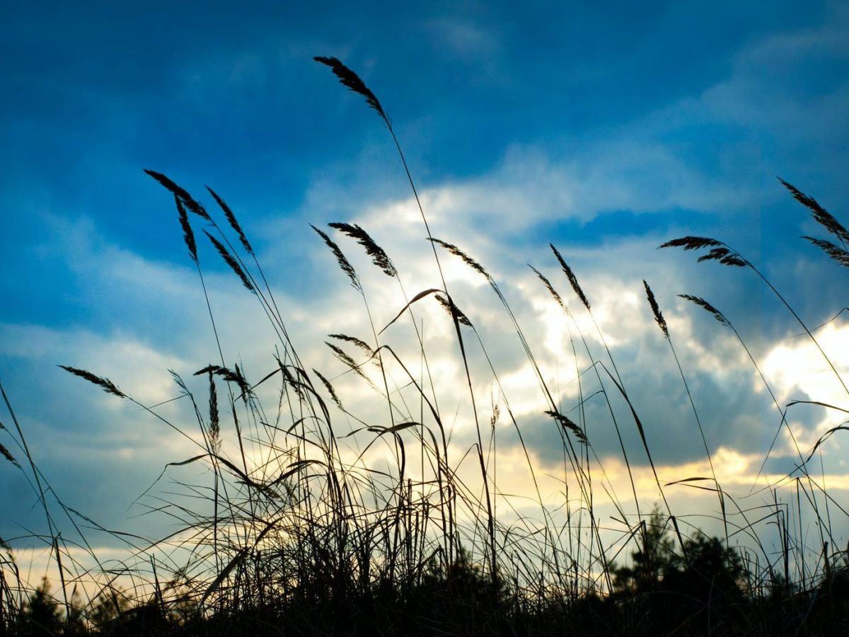 tall grass under cloudy day sky