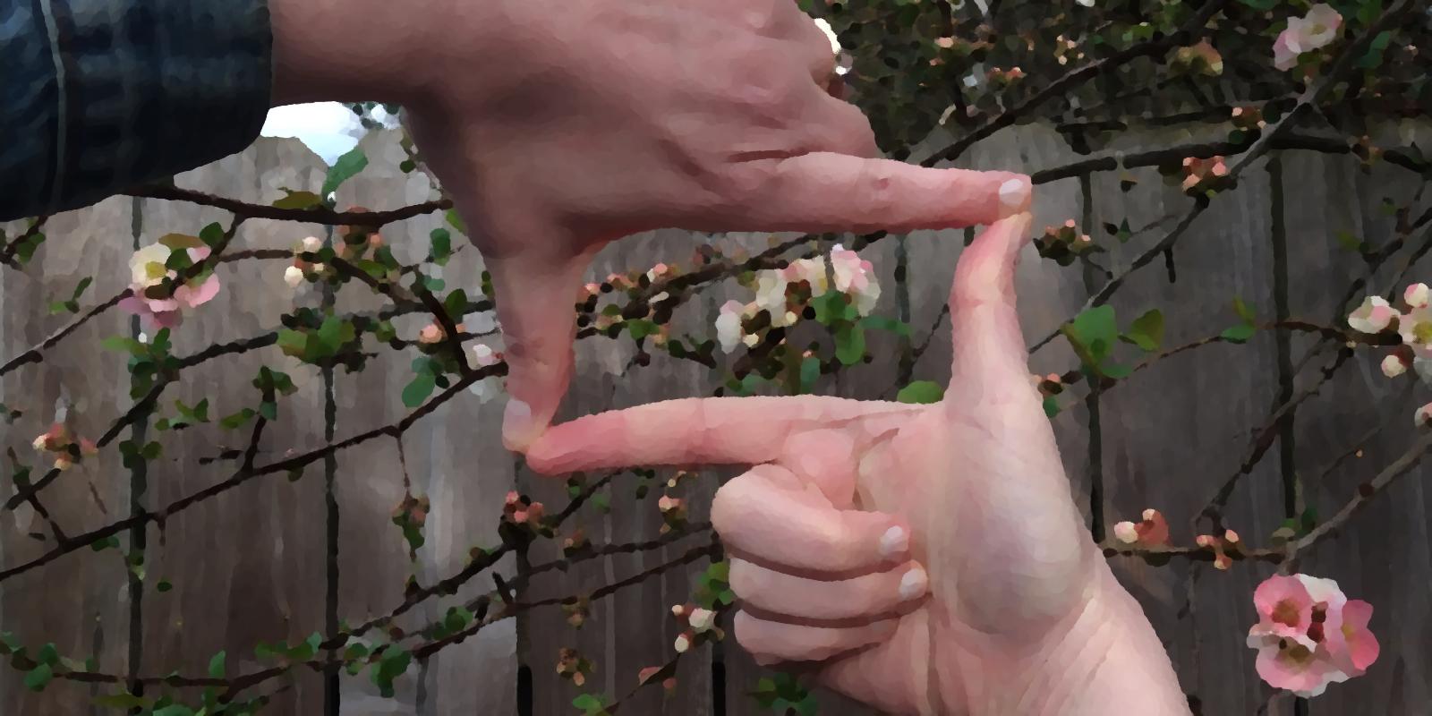 Hands form a frame around flowers.
