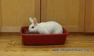 the rabbit haven