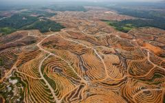 Opinion: Palm oil consumption in relation to deforestation
