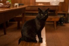 This is Emilio, he lives at the Frey. The hut was built in 1956 and name after Emilio Frey. Obviously the cat is named after him!