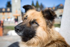 This random dog made a good subject for taking a few shots in the Civic Center area of Bariloche