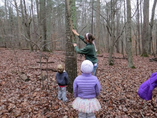 Ms. Angela shows us a tree.