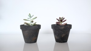 Two small 'Halley' pots with succulents