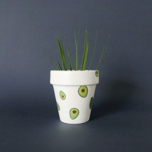 Avocado pot with air plant