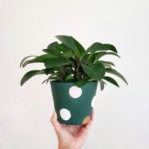 Pollyanna Pot with Peperomia Plant